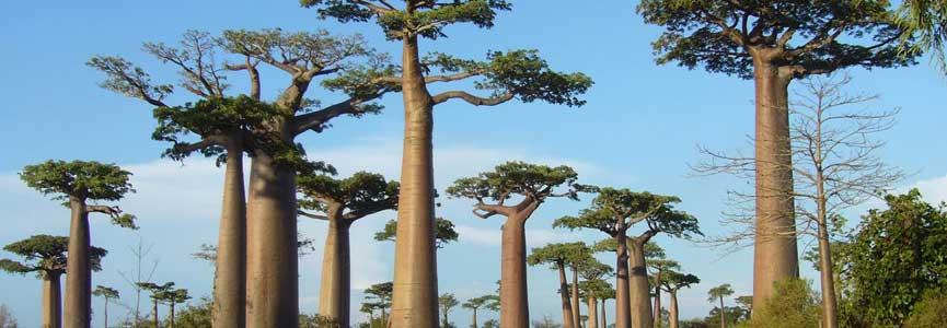 Madagascar, une excellente