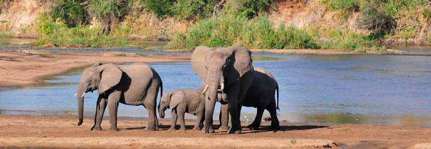 faune sauvage du Kenya